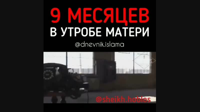 Мухаммад Хоблос 9 МЕСЯЦЕВ В УТРОБЕ МАТЕРИ