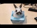 Funny Baby Bunny Rabbit Videos 4 - Cute Rabbits Compilation 2018