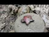 Подъем четырех без вести пропавших солдат. Раскопки в Рамушевском коридоре смерти