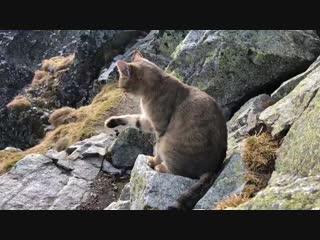 Польский турист на высоте 2,5 тыс. м над уровнем моря нашел кота