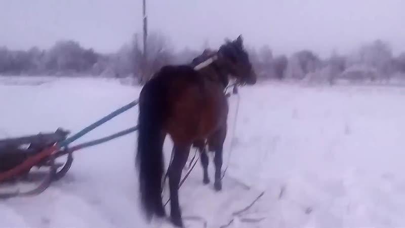 Хитрая лошадь Часть 2