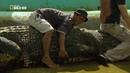 Nat Geo Wild Охота на гигантского крокодила 1080р