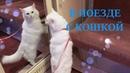 36 ЧАСОВ С КОШКОЙ В ПОЕЗДЕ | Cat's relax
