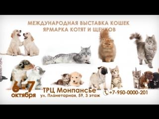 Выставка кошек 6-7 октября С-Петербург