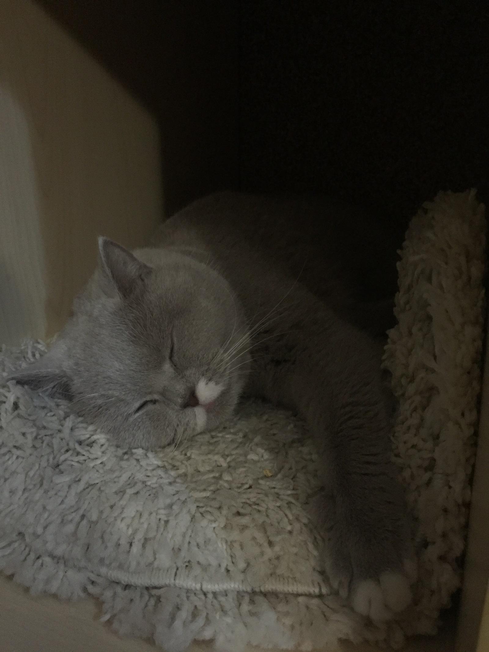 Фитнесс-браслет и кот. Как узнать сколько же спит эта пушистая сволочь?