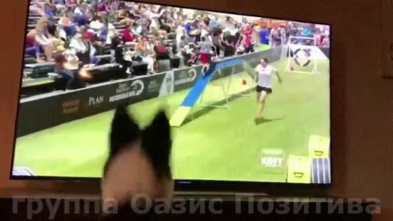 Чемпион смотрит своё выступление по телевизору