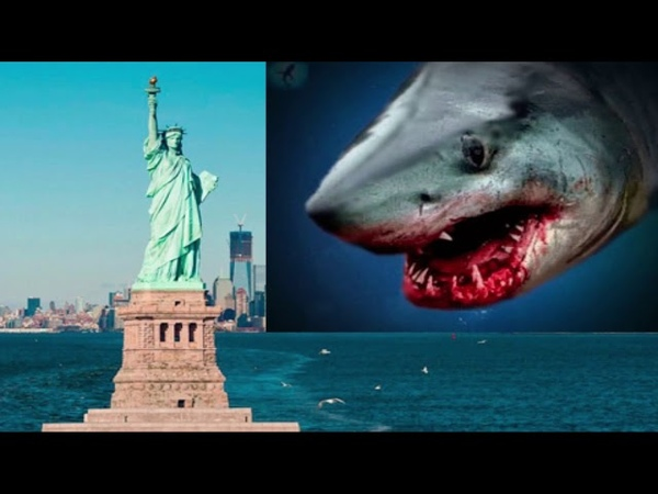 Возле Нью Йорка собрались акулы Они чуют еду