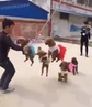 And now... Five Dogs Jumping Rope!