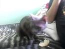 Кошка и дыня