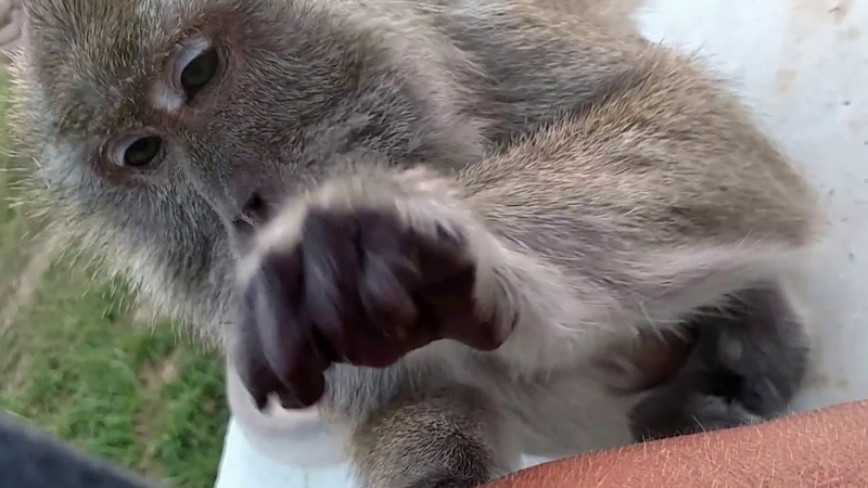 Unintentional ASMR - Monkey grooming 🐒 - no talking 🙊