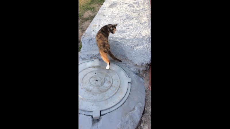 привет котик