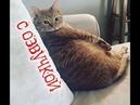 Приколы с котами – Смешная озвучка животных – Я РЖАЛ ПОЛЧАСА – ДО СЛЁЗ - PSO
