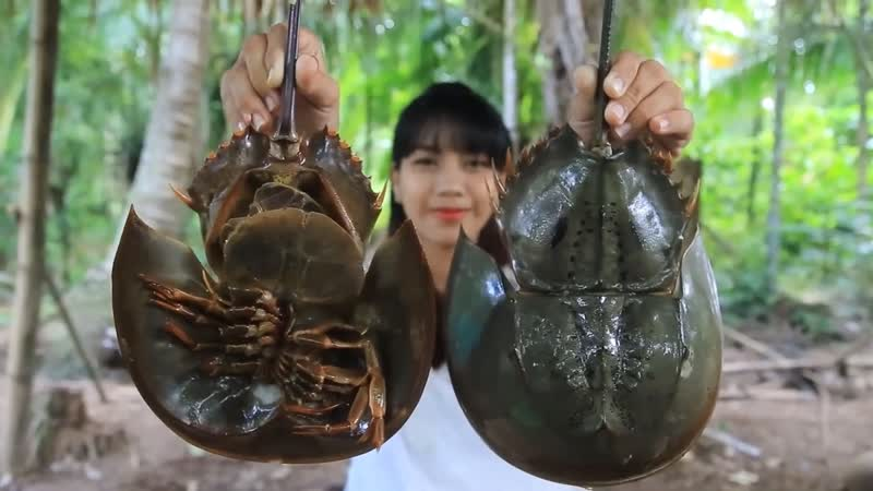 Экзотическая кухня Мечехвост Хоу краб подкова или ХоуЮй мечехвост рыба он же Horseshoe Crab Тахиплеус трезубый л
