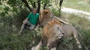 Это видео со львами ПОРВЕТ КИТАЙ