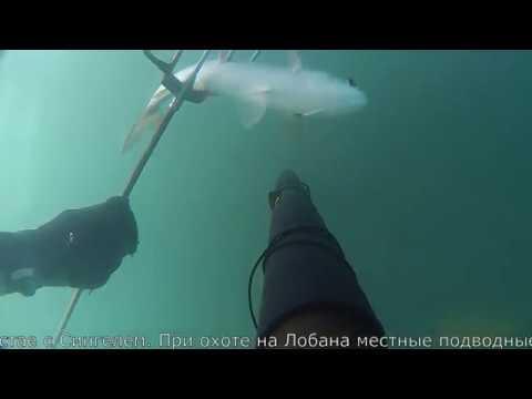 подводная охота на черном море кефаль