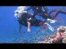 Красное море дайвинг