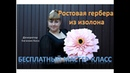 DIY Ростовые цветы Большая розовая гербера Large pink gerbera