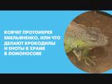 Ковчег протоиерея Емельяненко, или Что делают крокодилы и еноты в храме в Ломоносове