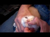 Berkshire Animal D.R.E.A.M.S feral kitten update - socializing, nail trim and de-worming