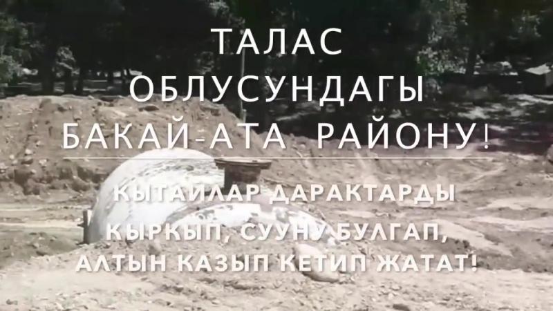 Митинг_ Кытай Таластагы 600 гектар жерди ээлеп, алтын казууга киришти