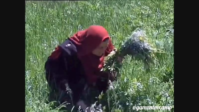 Гидатль. Шамильский район. Дагестан