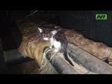Котики застряли в подвальчике