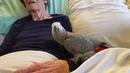Grieving parrot