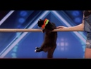 Đốn Tim Khán Giả MÈO Ninja CATS ACT Marina Savitsky Cats Eng Vietsub America's Got Talent 2018