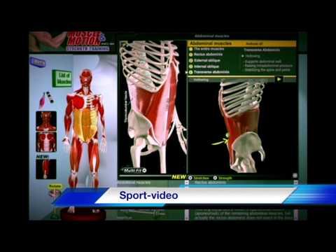 Биомеханика Мышц Живота. Анатомия и 3D анализ Упражнений