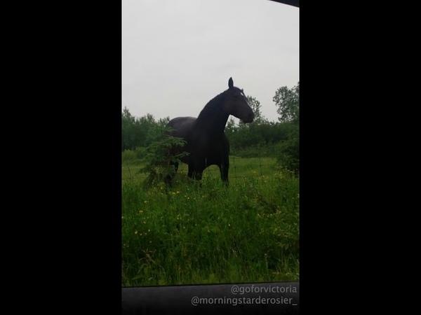 Horse Jamming to Fleetwood Mac