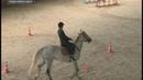 Праздник дружбы и верховой езды без границ в Чувашии прошёл фестиваль Жемчужинки Поволжья
