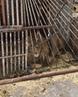 """Помощь Животным on Instagram: """"критическая ситуация!! Животные в Покровске замерзнут до смерти в минусовую температуру. Это будет минус 9 в воскрес"""