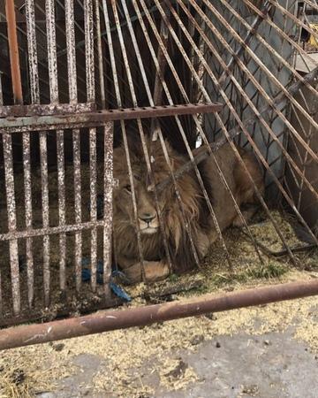 """Помощь Животным on Instagram: """"критическая ситуация!! Животные в Покровске замерзнут до смерти в минусовую температуру. Это будет минус 9 в воскрес..."""