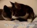 Влюбленные кошечки Прикол
