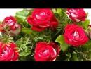 V-s.mobiКрасивое музыкальное видео поздравление с днем рождения любимой девушке..mp4