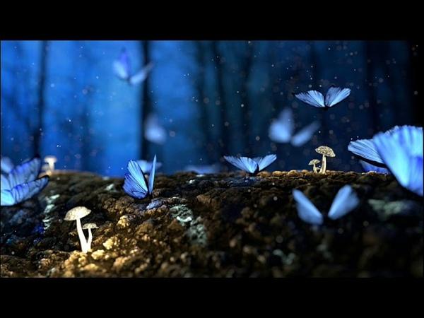 Matan Caspi Ziger - Butterfly (Original Mix)