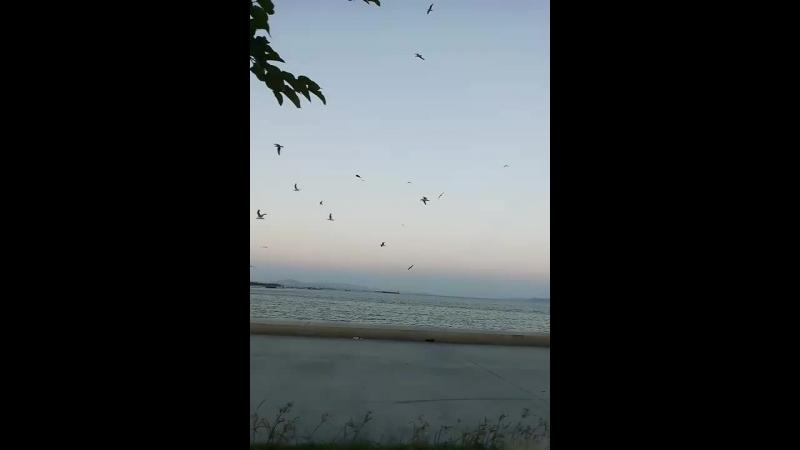 Istanbul sahil