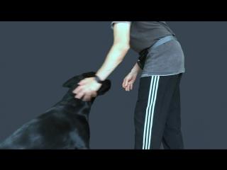 Джордж. Учим собаку держать корм на носу. )