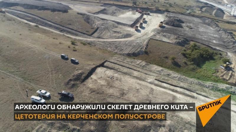 Скелет древнего кита найден в Крыму