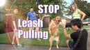 How To Train your Dog NOT to PULL on the Leash STOP CHASING or LUNGING at CARS on a Walk