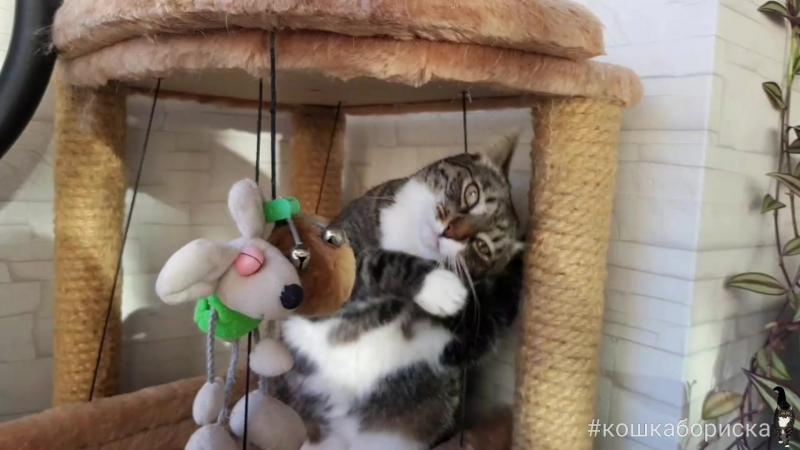 кошкабориска Проснулась лапочка Грации кошек может позавидовать даже самая утонченная леди