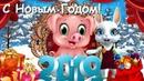 Zoobe Зайка Поздравление с Новым годом Свиньи 2019