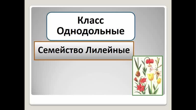 Биология. Семейство Лилейные. Людмила Ивановна. Profi-Teacher.ru