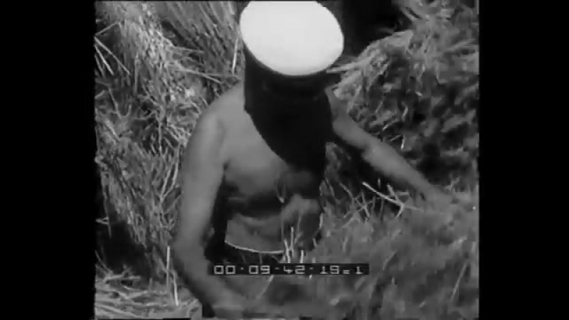 Mussolini trebbia il grano a Sabaudia- la folla lo acclama