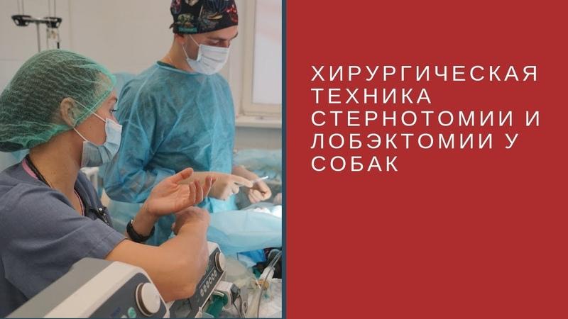 Хирургическая техника стернотомии и лобэктомии у собак при неопластическом поражении легких