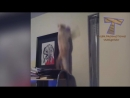 Funny CAT FAILS that will make you POOP YOUR PANTS FROM LAUGHING - Best CAT comp