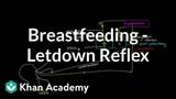 Breastfeeding - Letdown Reflex