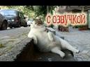 Приколы с котами и смешная озвучка животных – Подборка приколов 2018 от PSO