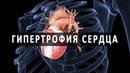 Почему возникает гипертрофия сердца