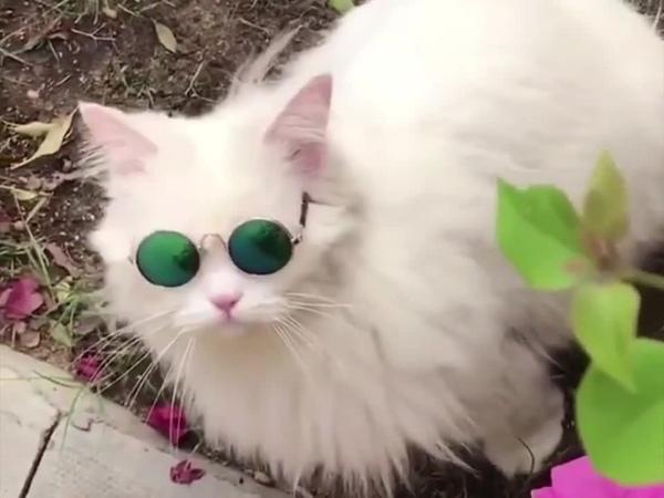 White cat - black betty